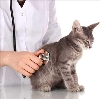 Ветеринарные клиники в Буйнакске